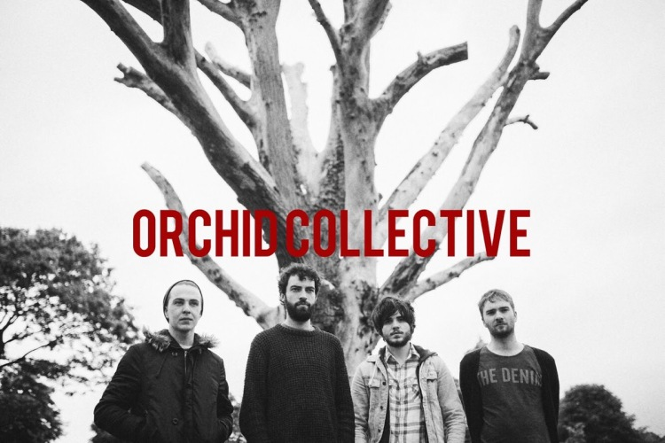 Orchid Collective