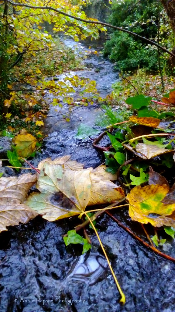 view from a bridge with fallen autumn leaves