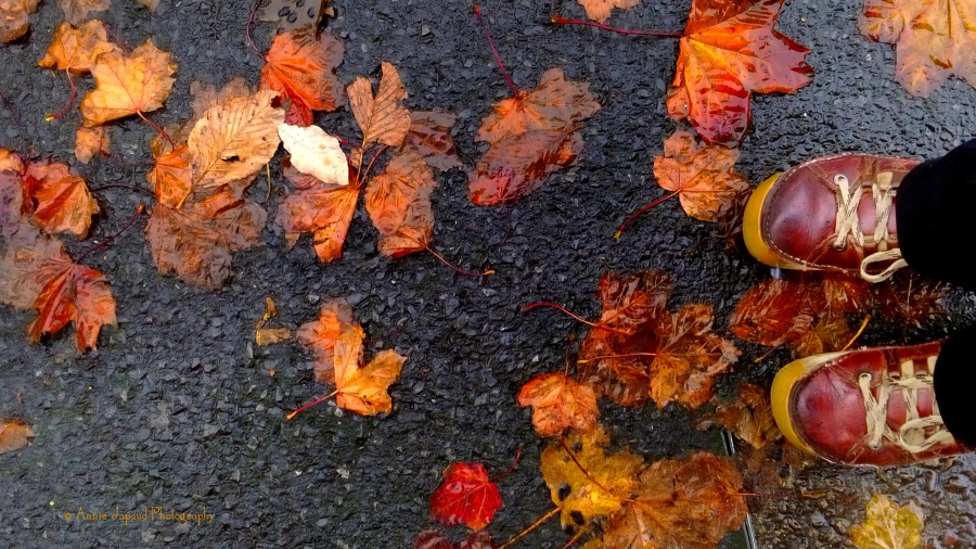 colourful leaves on the ground, red shoes