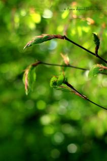 spring leaves © Annie Japaud Photography