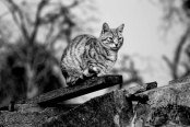 Animals dying. And living like Aristocrats | Six Word Stories: 673, by Nina KARADZIC | PhotoStory by Darius IVAN