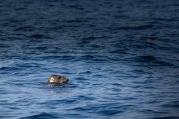 Scuba Diving Trip to Inishbofin. Photo by Darius Ivan