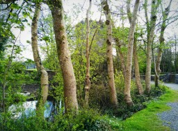 The path to Aughnanure castle