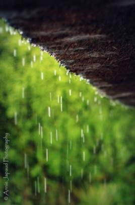June rain © Annie Japaud Photography