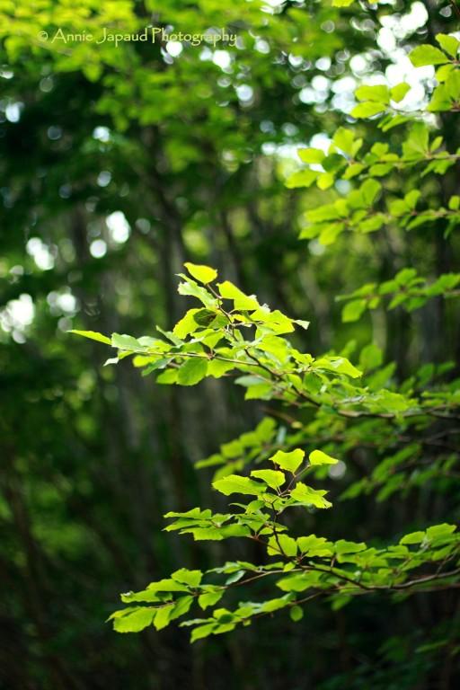 Green rhapsody