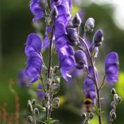 Purple summer