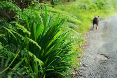 Walking with the doggies