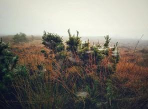 2017-0925-fog-and-cobwebs-c2a9-annie-japaud-photography-1.jpg