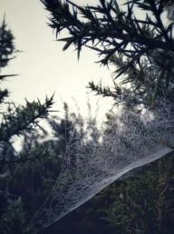 2017-0925-fog-and-cobwebs-c2a9-annie-japaud-photography-10.jpg