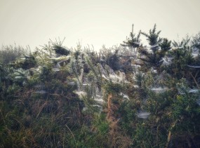 2017-0925-fog-and-cobwebs-c2a9-annie-japaud-photography-12.jpg