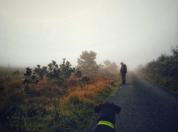2017-0925-fog-and-cobwebs-c2a9-annie-japaud-photography-3.jpg