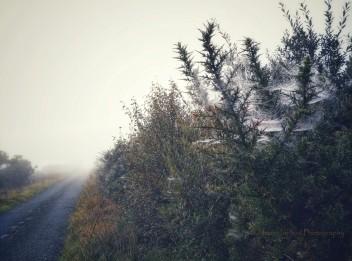 2017-0925-fog-and-cobwebs-c2a9-annie-japaud-photography-5.jpg