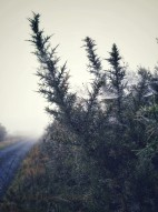Connemara in the fog
