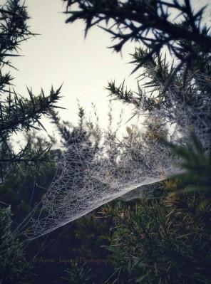 Gorse Web Castles