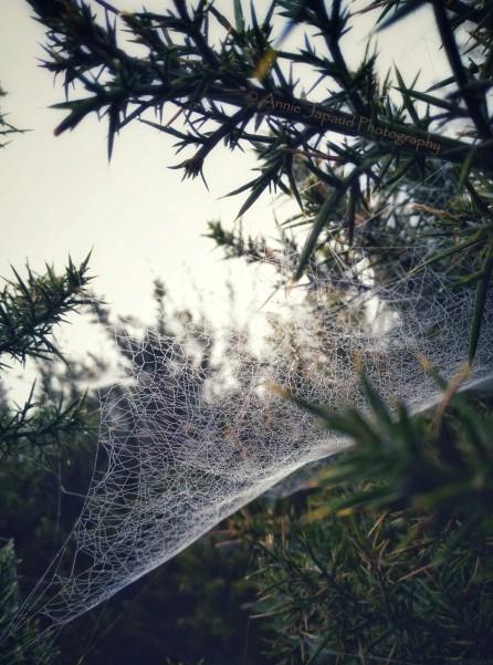 2017-0925-fog-and-cobwebs-c2a9-annie-japaud-photography-9.jpg